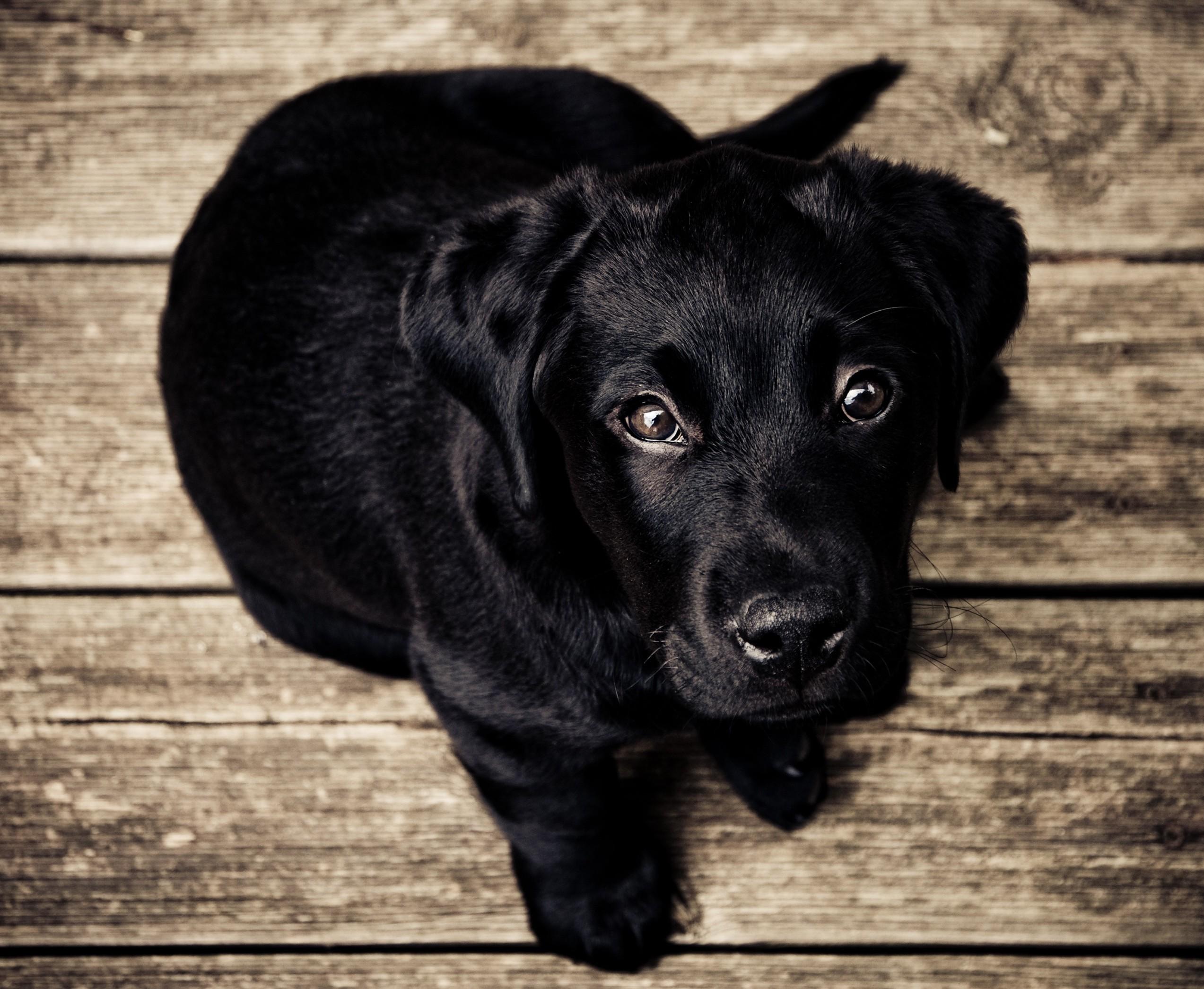 Animal Behaviour - Dog training, puppy training and lifeskills