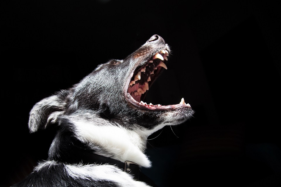 Dog behaviour problems such as aggression can be difficult to manage